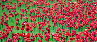 1000poppies